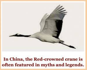 red-crowned-crane-f
