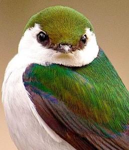 green-white-bird